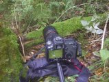 Making of Picture - Pilz - EOS 50D, EF 100 f/2.8L Macro IS UMS