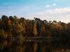 Herbstwald - eins