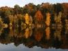 Herbstwald - zwei