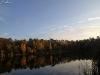 Herbstwald - drei