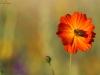 Biene - Blume