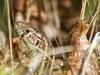 Salamander - Schwanzlurch