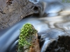 fließendes Wasser - vier