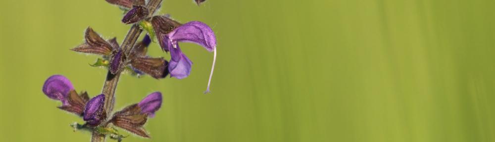 Making of Picture – Blüte freistellen